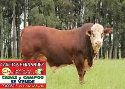 Campo Ganadero Venta Florida 140 H Fray Marcos Posible Finan