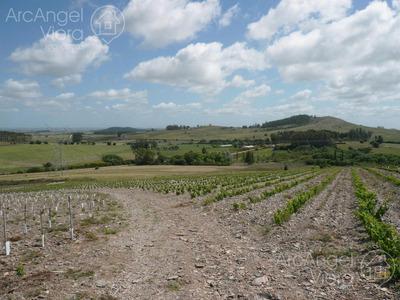 Campo De 10 Hectareas Con Viñedo De 2 Hectareas- Abra De Perdomo