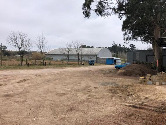 Terreno Carrasco Norte Alquiler Explanada Diversos Metrajes Sin Garantía Martin Usabiaga Sala