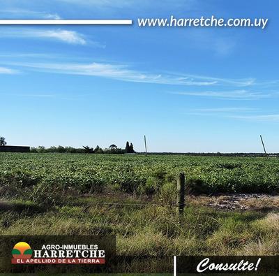 Chacra De 12has Zona De Progreso-inmobiliaria Harretche