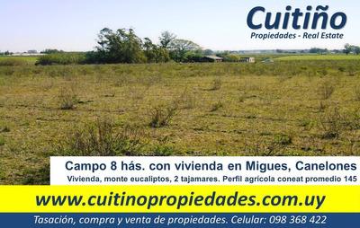 Campo 8 Has. Coneat 145 Con Vivienda