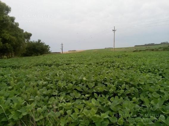 154 Hectáreas De Campo Agrícola En Flores, Con Financiación!