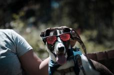 Fotografia De Mascotas,foto Book De Cachorros , Recuerdos.