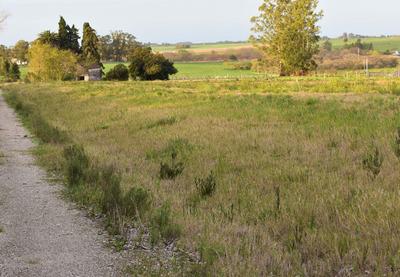 Terreno En La Colorada - Colonia Del Sacramento Ruta 21