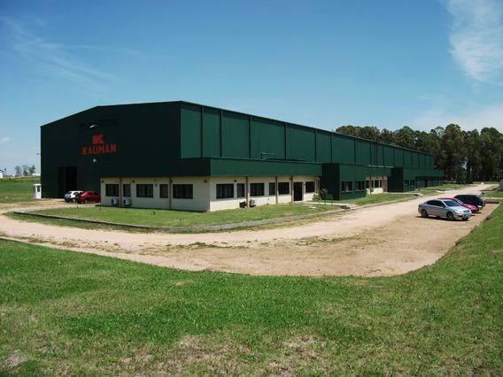 Nave / Planta Industrial Actividad Fabril Y Oficinas.