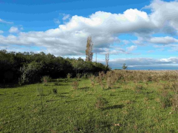 Campo De 36 Hectáreas En Tala.