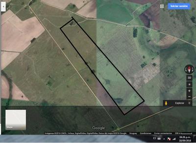 Vendo Campo Agrícola Ganadero Proximidades Treinta Y Tres.