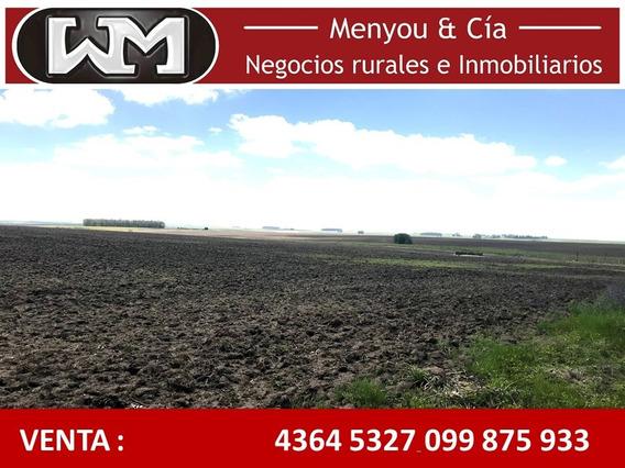 Venta Campo Flores 240 Hectáreas 80% Agrícola 7km De Ruta