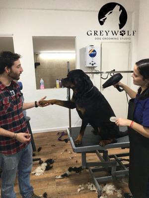 Greywolf - Peluquería Canina Profesional