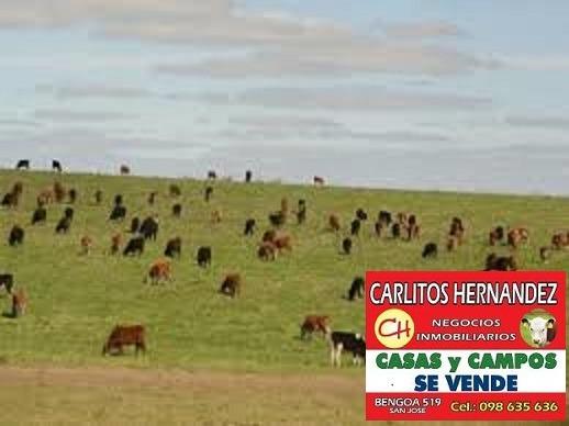 Campo Venta 400 Has Paysandu Agri Ganadero U$ 4.000 / Ha