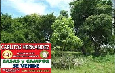 Oportunidad Hoy Campo Para Venta 50 Ha U$ 980.- Ha Ganadero