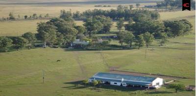 Campo Ganadero En Paysandú En Venta. Ref: 5322