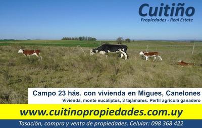 Campo 23 Has. Con Vivienda En Migues Canelones