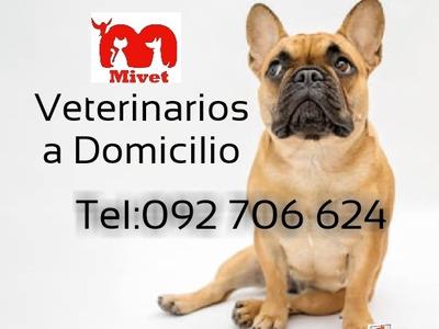 Asistencia Veterinaria A Domicilio, Urgencias, Cirugias
