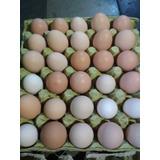Huevos De Campo . Producción Agro Ecológica