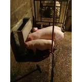 Comedero Tolvas Para Cerdos, Chanchos, Ovejas 20 Kgs Bieno