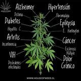Aceite De Cannabis Y Loción Analgésica Y Antiinflamatoria