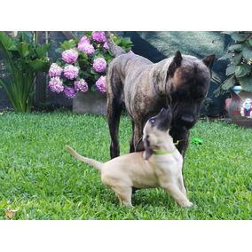4f0afcb35b75 Subasta De Canarios - Perros de Raza en Mercado Libre Argentina