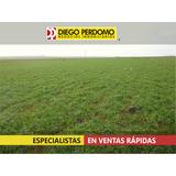 Campo En Venta, 1077 Has, San José