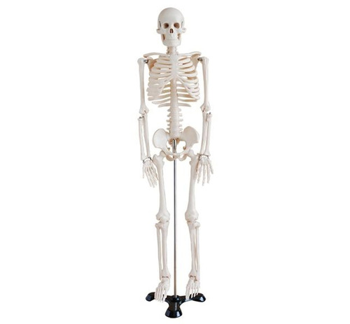 Mini Esqueleto Humano 85 Cms - Modelo Anatomia - $ 2.455,00 en ...