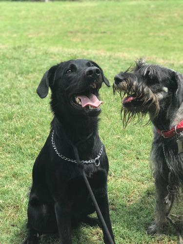adiestramiento canino y pensionado