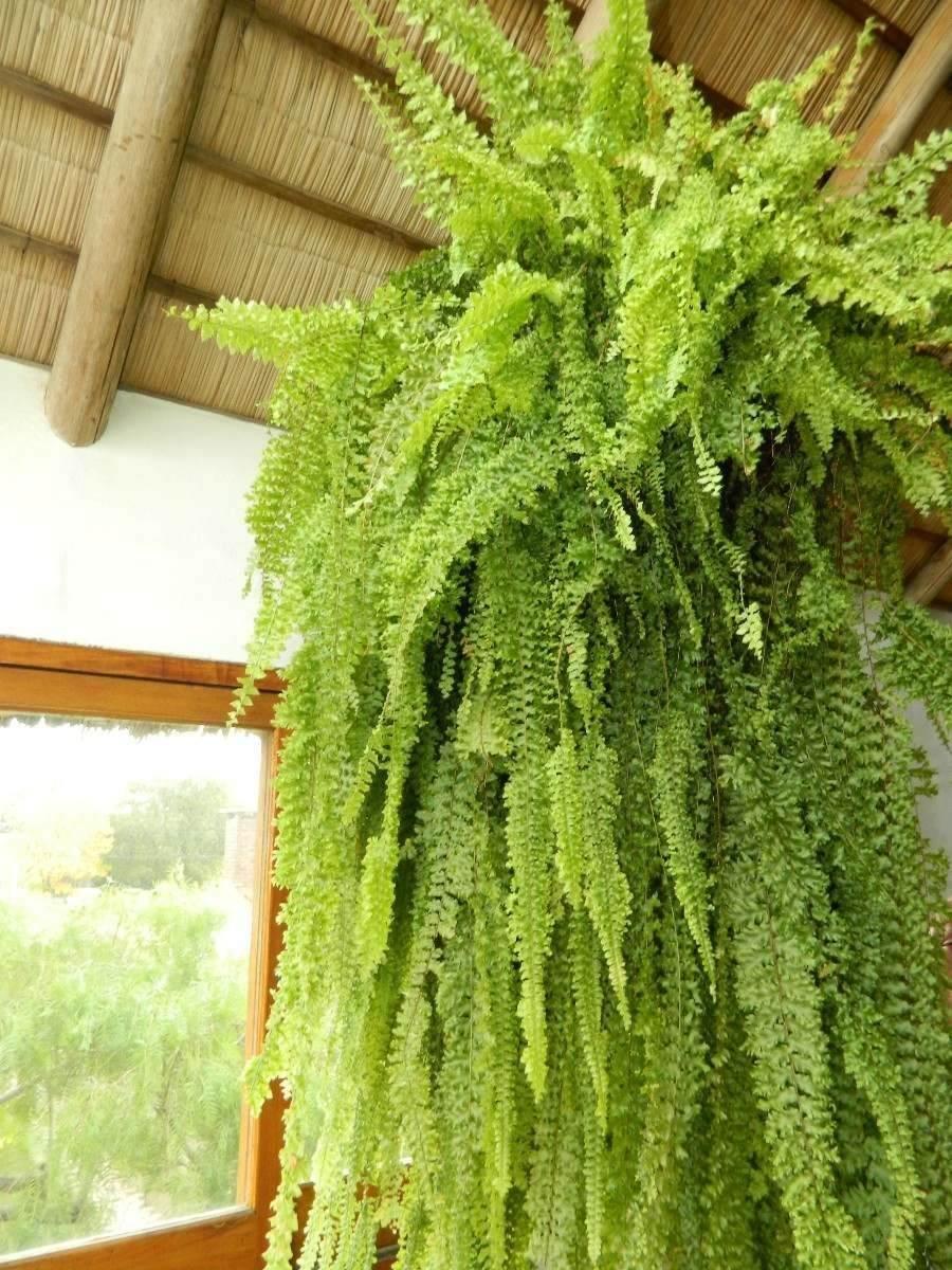 Alimento para helechos palo de agua y plantas verdes - Plantas verdes exterior ...