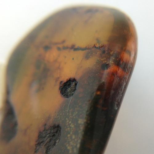 ambar fosil especimen garantizado con insecto y burbujas gbm