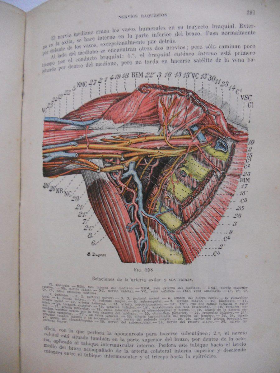 Anatomía Humana Tomo 3 - Testut Latarjet - Edición Año 1949 - $ 700 ...