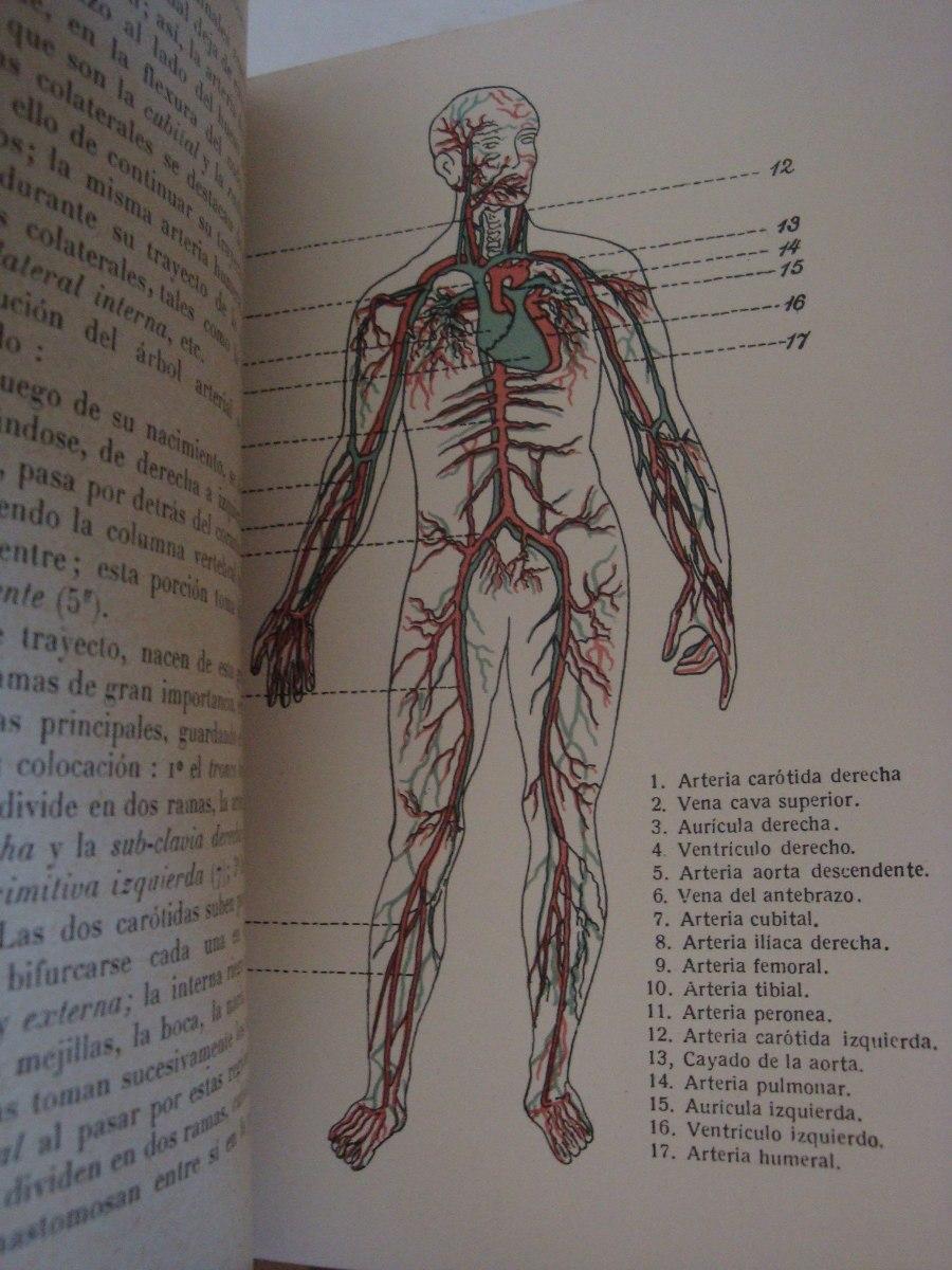 Anatomía Y Fisiología. Francisco Otero. - $ 70,00 en Mercado Libre