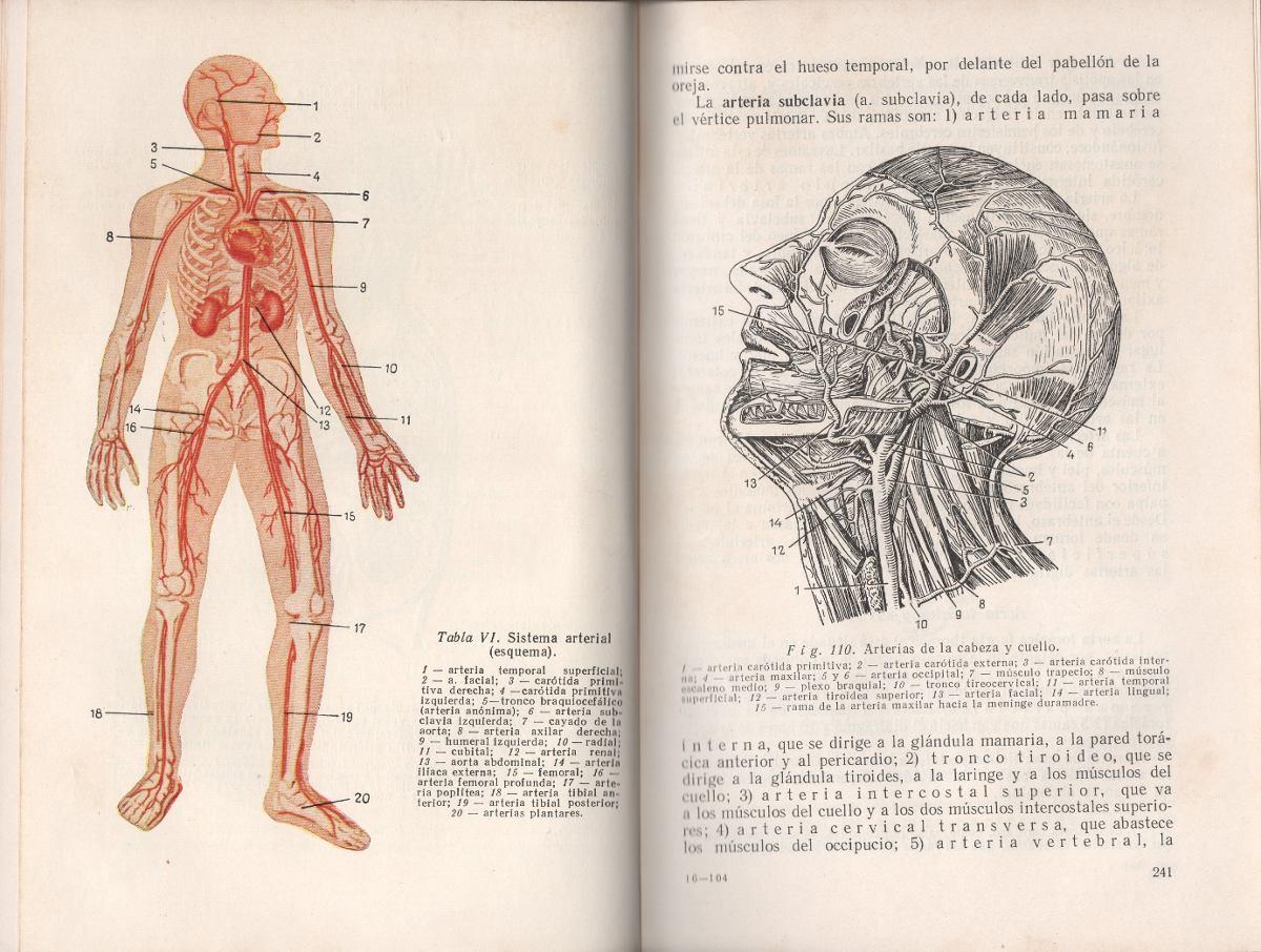 Anatomía Y Fisiología Humanas De V. Tatarinov - $ 150,00 en Mercado ...