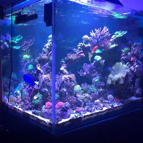 asesoriamiento, diseño, armado y service - acuarios marinos