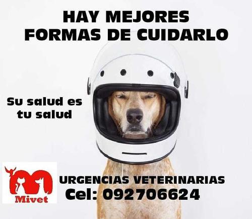 asistencia veterinaria a domicilio
