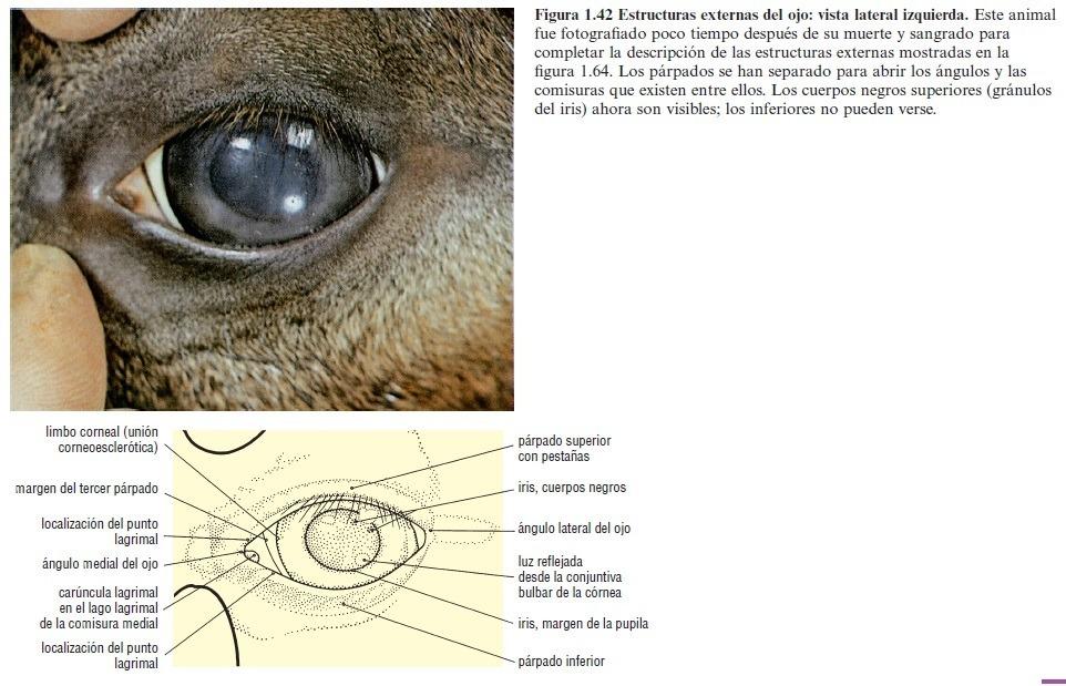 Atlas A Color De Anatomía Veterinaria: El Caballo. Digital. - $ 220 ...
