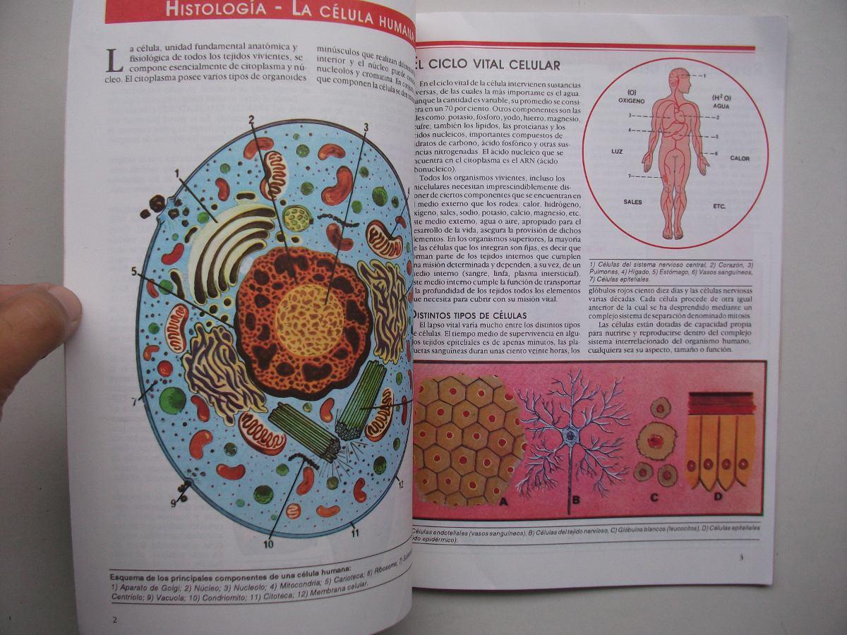 Atlas De Anatomía Humana - Descripción Analítica Ilustrada - $ 140 ...