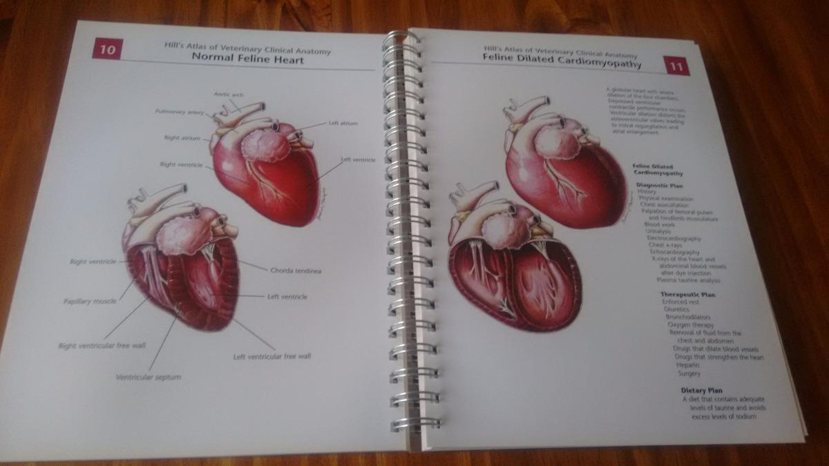 Atlas Hill\'s Anatomía Veterinaria - $ 3.690,00 en Mercado Libre