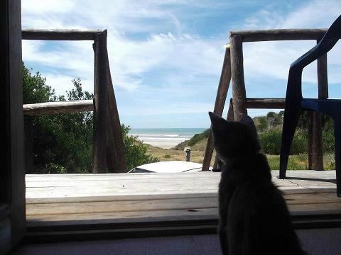 barra del chuy uy alquilo frente al mar o bosque wi fi dirtv