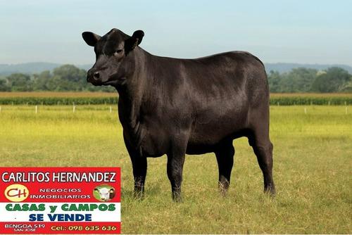buen campo agricola ganadero arrendar 1.400 has tacuarembo