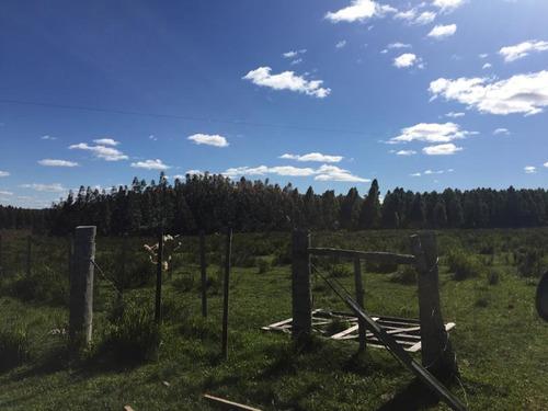 buen campo sobre ruta 6, km 245