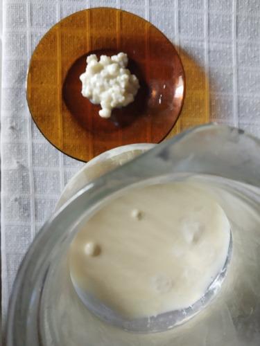 búlgaros o kefir