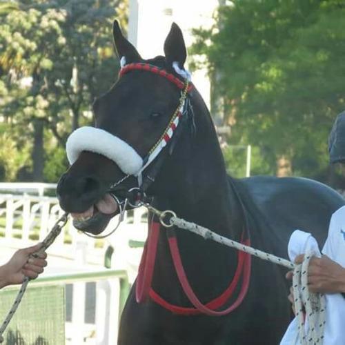 caballo - muserola