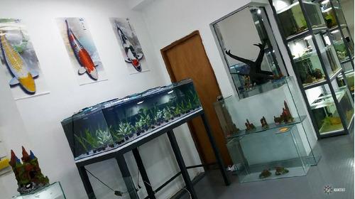 calentador calefactor acero 300w pecera/hidroponia aquassius