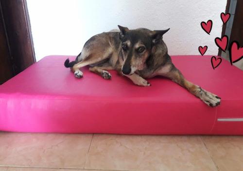 camas colchonetas para mascotas, también personalizadas!!