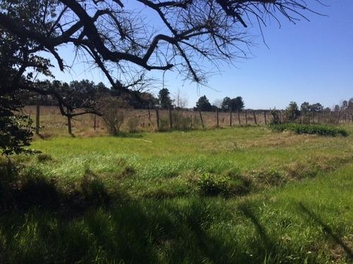 camino de los horneros. chacra. 6  hectáreas (60.000 m2)
