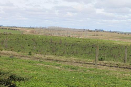 campo 128hás mixto soriano ruta n°55