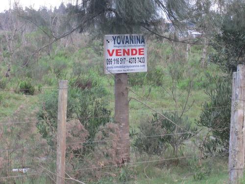 campo 21 hectáreas cuchilla alta (ref. y150)