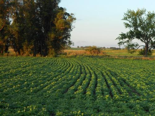 campo 27 has agricola en lavalleja