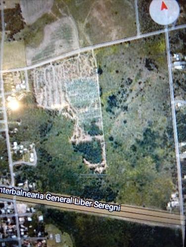 campo 29,5 hect, 92% de prod, junto a la interbalnearia.