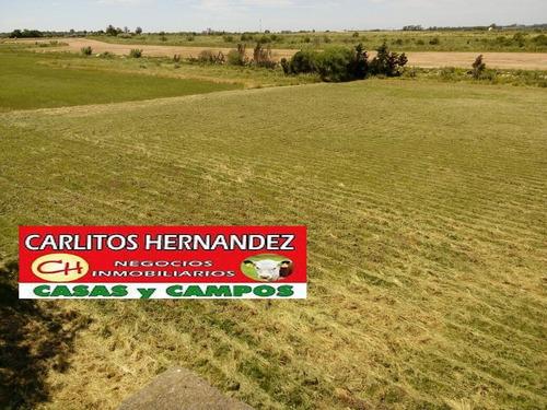 campo 500 h agrico cololo soriano venta posible fin u$ 8 mil
