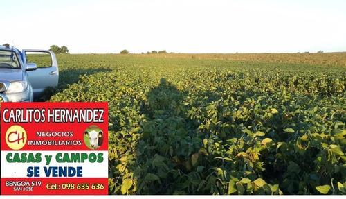 campo 500 ha agricola muy buen coneat y con riego. pos finan