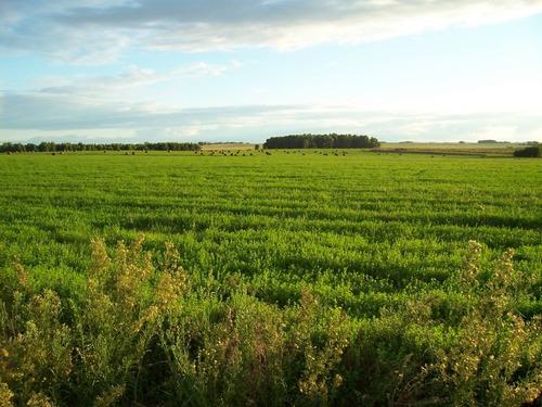 campo agricola en soriano